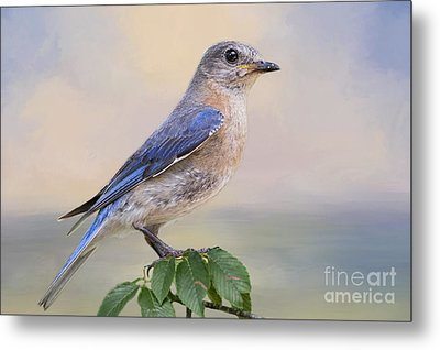 Misty Morning Bluebird Metal Print by Bonnie Barry