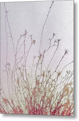 Nerve Cell Culture, Sem Metal Print by Steve Gschmeissner