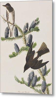 Olive Sided Flycatcher Metal Print by John James Audubon