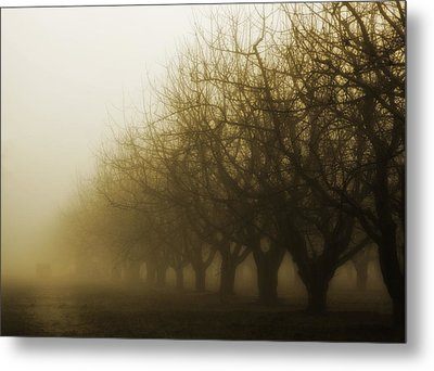 Orchard In Fog Metal Print by Rebecca Cozart