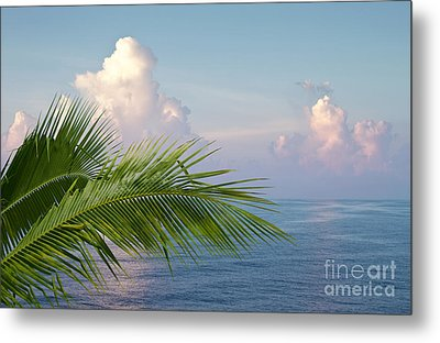 Palm And Ocean Metal Print by Blink Images