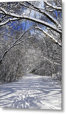 Path In Winter Forest Metal Print by Elena Elisseeva