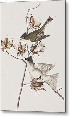 Pewit Flycatcher Metal Print by John James Audubon