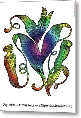 Pitcher Plant Metal Print by Eric Edelman