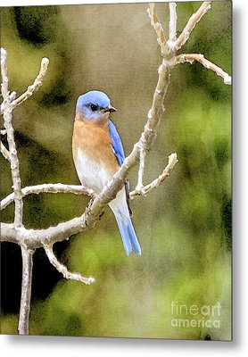 Rhapsody In Blue Metal Print by Betty LaRue