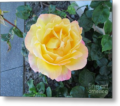 Rose Metal Print by Joyce Woodhouse