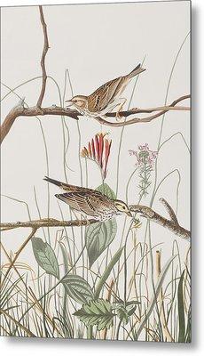 Savannah Finch Metal Print by John James Audubon