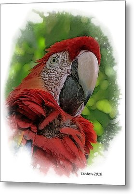Scarlet Macaw Metal Print by Larry Linton