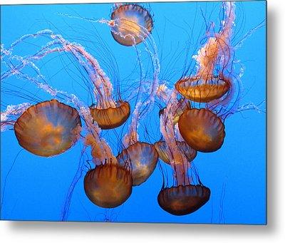 Sea Nettles Ballet 1 Metal Print by Diane Wood