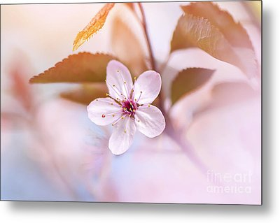 Simply Pink Metal Print by Jacky Parker