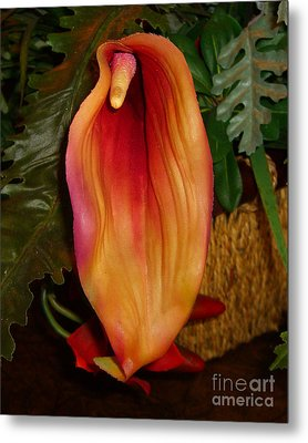 Single Spath Flower Metal Print by Merton Allen