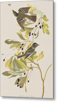 Small Green Crested Flycatcher Metal Print by John James Audubon