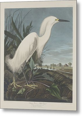 Snowy Heron Or White Egret Metal Print by John James Audubon