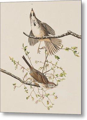 Song Sparrow Metal Print by John James Audubon