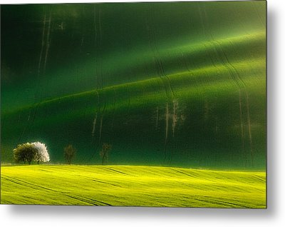 Spring Time Metal Print by Piotr Krol (bax)