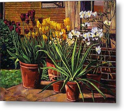 Spring Tulips And White Azaleas Metal Print by David Lloyd Glover