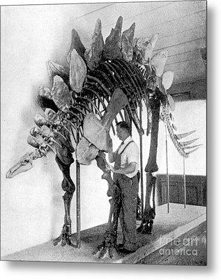 Stegosaurus Metal Print by Science Source