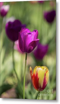 Study Of Tulips Metal Print by Doc Braham