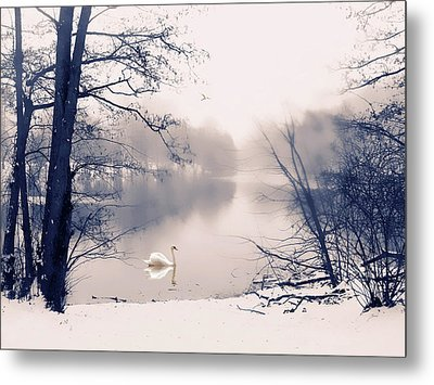 Swan Song Metal Print by Jessica Jenney