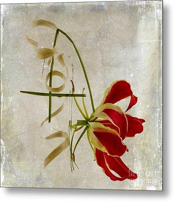 textured Gloriosa Lily. Metal Print by Bernard Jaubert