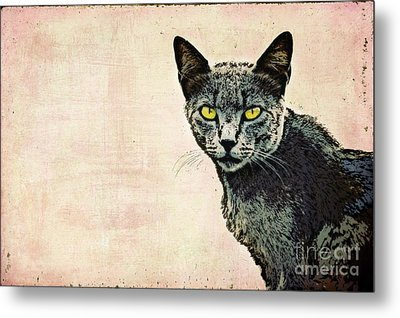 The Cat Metal Print by Angela Doelling AD DESIGN Photo and PhotoArt