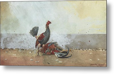 The Cock Fight Metal Print by Winslow Homer