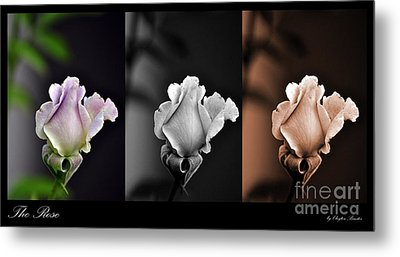 The Rose Metal Print by Clayton Bruster