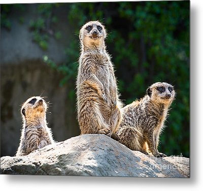 Three's Company Metal Print by Jamie Pham