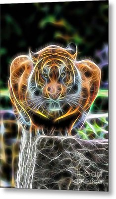 Tiger Collection Metal Print by Marvin Blaine