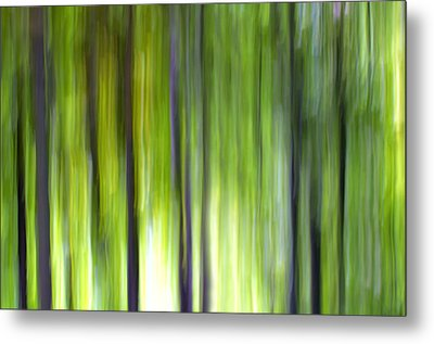 Trees Metal Print by Silke Magino