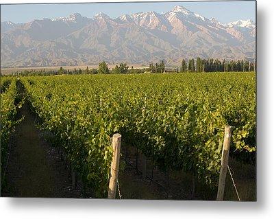 Vineyards In The Mendoza Valley Metal Print by Michael S. Lewis