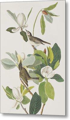 Warbling Flycatcher Metal Print by John James Audubon
