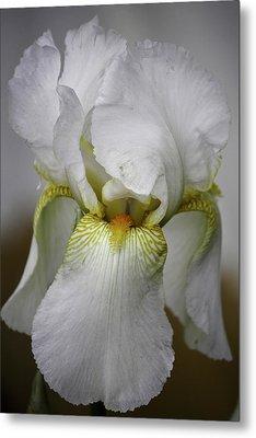 White Iris Metal Print by Teresa Mucha