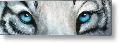 Whos Watching Who...white Tiger Metal Print by Darlene Green