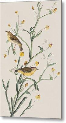 Yellow Red-poll Warbler Metal Print by John James Audubon