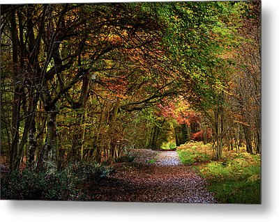 Fontainebleau Forest Metal Print by Olivier Blaise