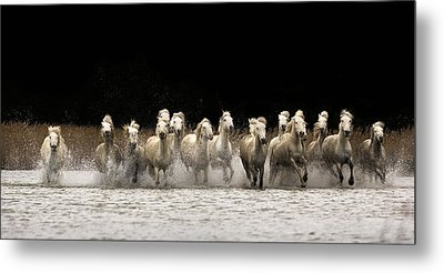 Camargue Horses Metal Print by Egija Labanovska