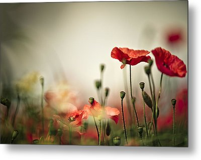 Poppy Meadow Metal Print by Nailia Schwarz