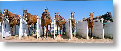 1998 World Polo Championship, Horses Metal Print by Panoramic Images