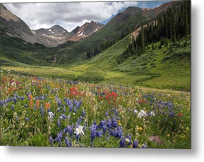 Alpine Flowers In Rustler's Gulch, Usa Metal Print by Bob Gibbons