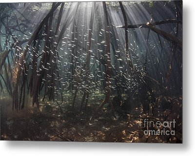 Beams Of Sunlight Filter Among The Prop Metal Print by Ethan Daniels