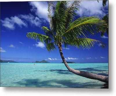 Bora Bora, Palm Tree Metal Print by Ron Dahlquist - Printscapes