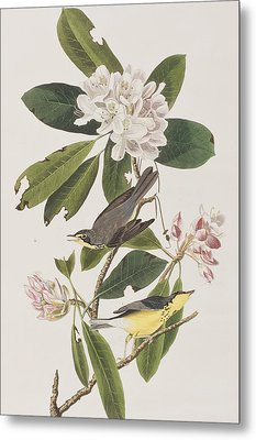 Canada Warbler Metal Print by John James Audubon