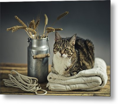 Cat Portrait Metal Print by Nailia Schwarz