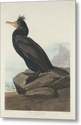 Double-crested Cormorant Metal Print by John James Audubon
