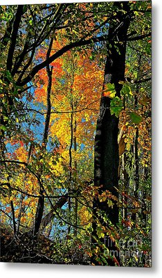 Fall Fire Works Metal Print by Robert Pearson
