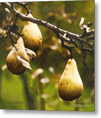 Fall Harvest Metal Print by Barb Pearson