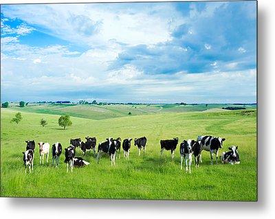 Happy Cows Metal Print by Todd Klassy