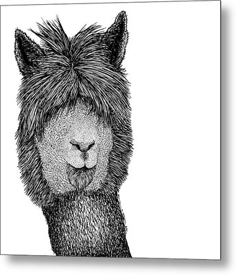 Llama Metal Print by Karl Addison