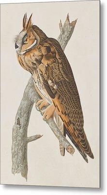 Long-eared Owl Metal Print by John James Audubon
